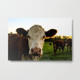 Sunset Cow Metal Print