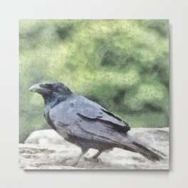 Crows Everywhere Are Equally Black Metal Print