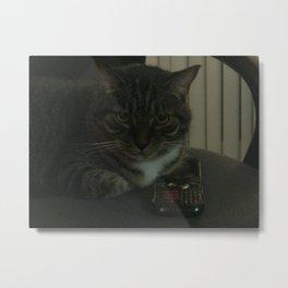 Cat Call Metal Print