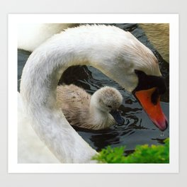 Swan Mothers Day Art Print