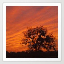 Scarlet Sunset Art Print