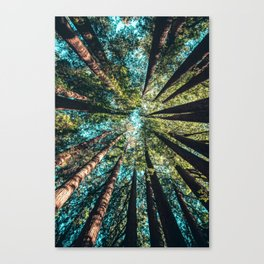 Treetop green blue Canvas Print