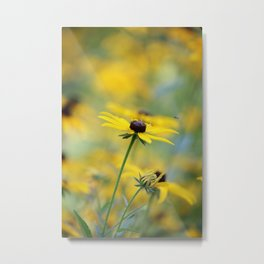 Black Eyed Susan Solo Metal Print