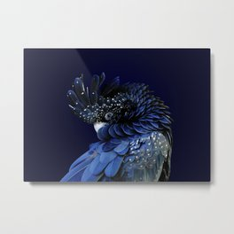 Australian Red-Tailed Black Cockatoo in Blue Metal Print