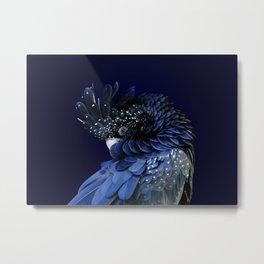 Australian Red-Tailed Black Cockatoo in Blue Metal Print
