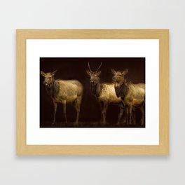 Three Elk Framed Art Print