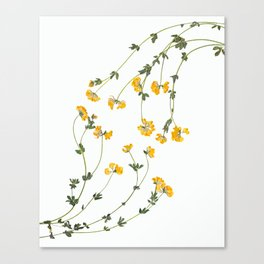 Yellow Lotus Flower Botanical Print Canvas Print