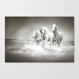 Wild White Horses Canvas Print