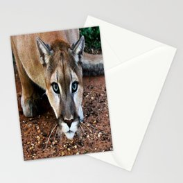 Hover-Cat ~Tin Cup ~ TC The Mountain Lion Stationery Cards