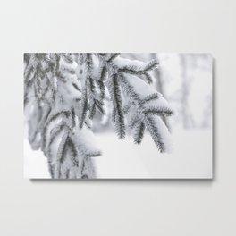 Snowy Spruce Needles 1 Metal Print
