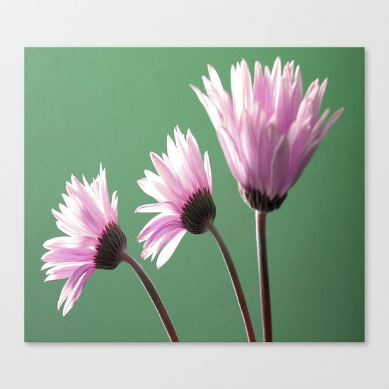 Rose  Gerbera Daisy Canvas Print