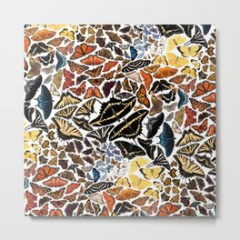 Butterflies of North America Pattern Metal Print