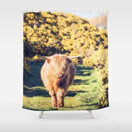 Lovely Scotland Highland Cow (Scottish Highland Cattle) is walking in the sun Shower Curtain