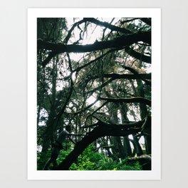 Spider Web Trees Art Print