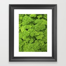 green garden herb II Framed Art Print