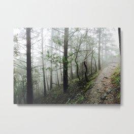 Tranquil Trail - Northern California Metal Print