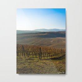 French vineyards 2 Metal Print