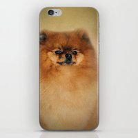 pomeranian iPhone & iPod Skins featuring Proud Pomeranian by Jai Johnson