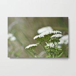 White Marshland Flowers Metal Print