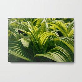 Green Goodness by Mandy Ramsey, Haines, Alaska Metal Print