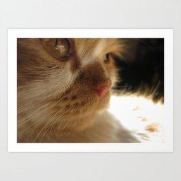 Cute Cat Face Art Print