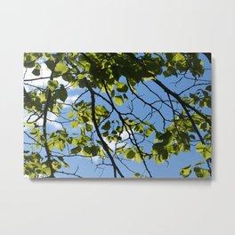 Spring Leaves and Sky Metal Print