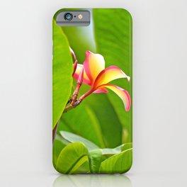 Plumeria iPhone Case