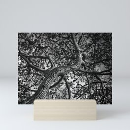 A Study of a Canadian Pine Tree Mini Art Print