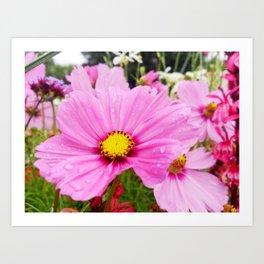 Cosmos Flower Art Print