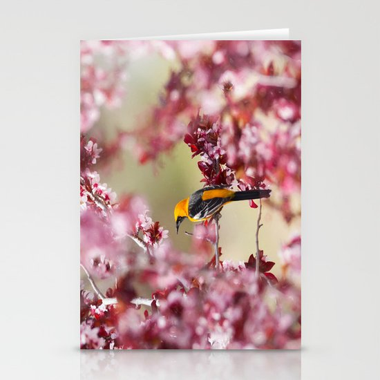 Oriole in Plum Tree by suelibertophotography