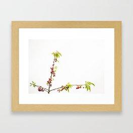 Cherry Bliss Framed Art Print