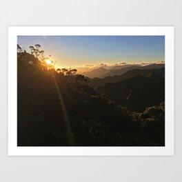 Kauai Forest Art Print
