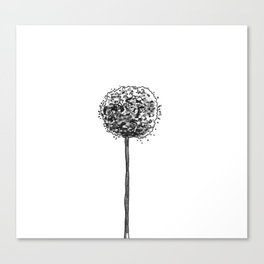 Allium pom Canvas Print