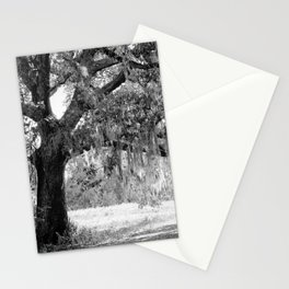 New Orleans Oak Tree Stationery Cards