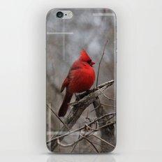 The Cardinal  iPhone & iPod Skin