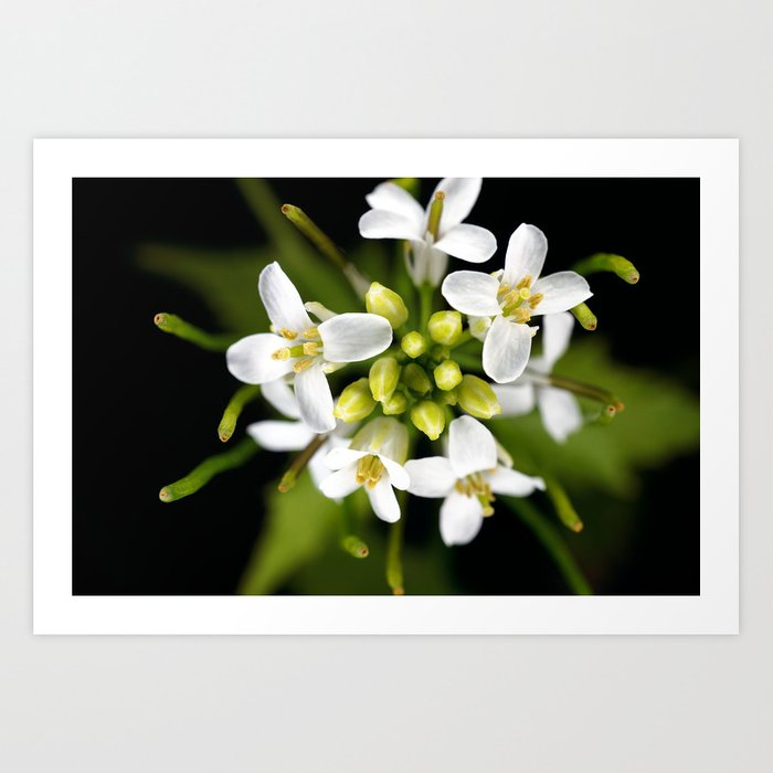 Tiny White Art Print