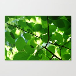Transparent Leaves Canvas Print