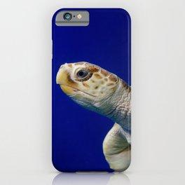Sea Turtle 2 Sea Animal / Underwater Wildlife Photograph iPhone Case