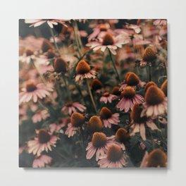 Echinacea Flowers  2 Metal Print