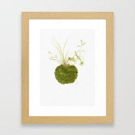 Kokedama 3 Framed Art Print