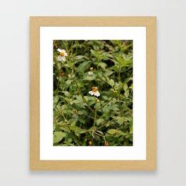 pollenation Framed Art Print
