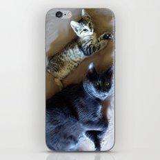 Kitty see kitty do... iPhone & iPod Skin