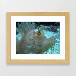Crazy Fish Framed Art Print