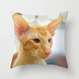 Young red oriental cat Throw Pillow