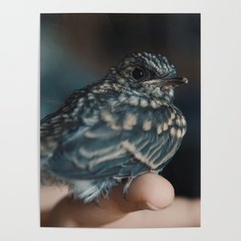 Gimbal The Pipit 01 Poster