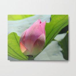 Lotus Bud in West Lake Metal Print
