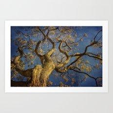Curls . Fall tree in Boston Garden, MA Art Print