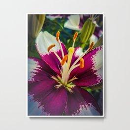 Lily 2 Metal Print