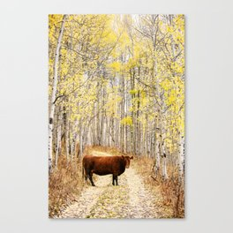Cow in aspens Canvas Print