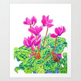 Cyclamen Art Print